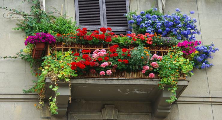Balcones en primavera. Envio flores y plantas